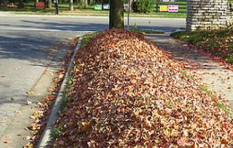 leaf-collection-begins-in-November
