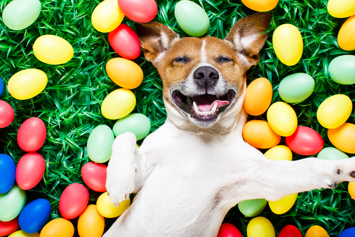 bigstock-Easter-Bunny-Dog-With-Eggs.jpg